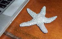 Starfish Gift.jpg