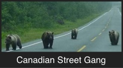 Canadian Street Gang
