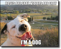 Roses are gray