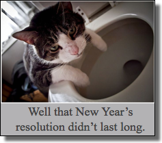 Cat new year resolution