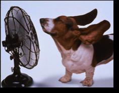 Beagle fan