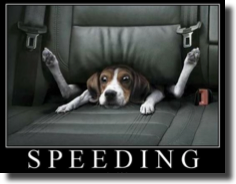 Speeding dog