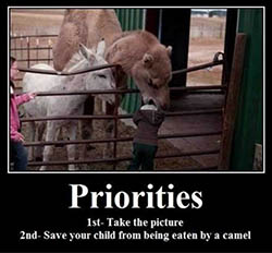 Priorities camel